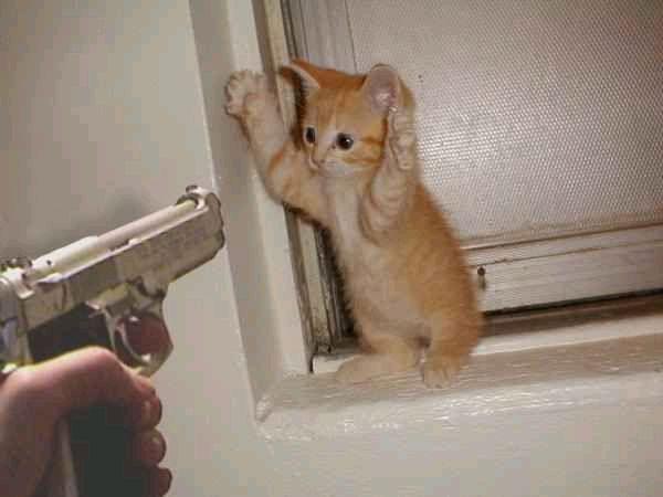 Gun_kitten_1